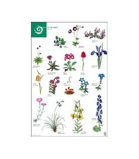 Dessins de fleurs du parc national des Pyrénées